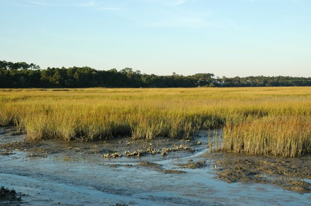 HuntingtonBeachSaltMarsh