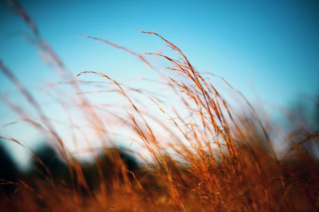 WheatWind